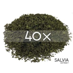 Salvia divinorum for sale